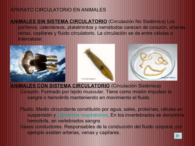 Sistema Circulatorio Animales