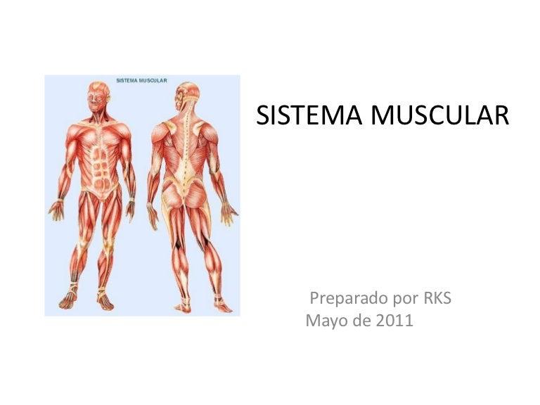 Hermosa CapÃtulo 6 El Sistema Muscular Hoja Respuestas Adorno ...