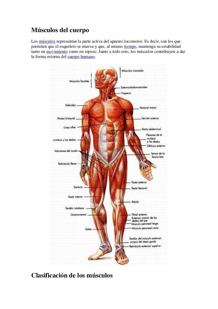 sistemamuscular-130629194428-phpapp01-thumbnail-4.jpg?cb=1372535101