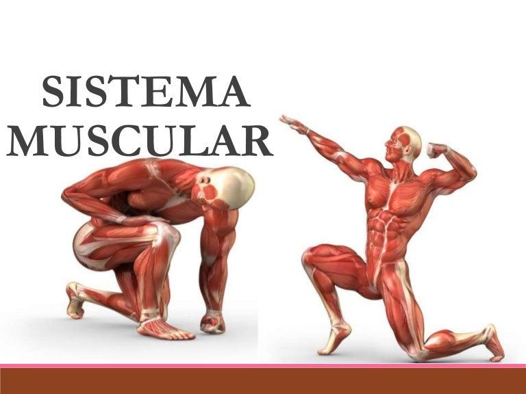 sistemamuscular-150705200634-lva1-app6891-thumbnail-4.jpg?cb=1436126854
