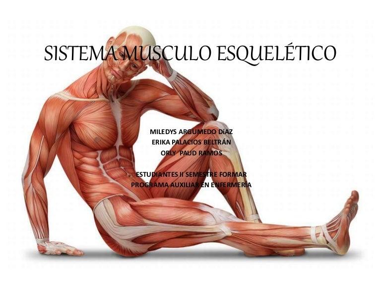 sistemamuscular-161128124529-thumbnail-4.jpg?cb=1480337260