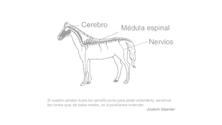 Sistema nervioso anatomía veterinaria