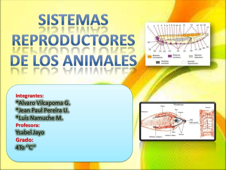Sistema reproductores de animales