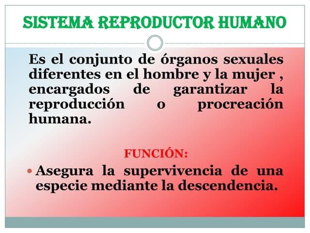 Sistema reproductor humano