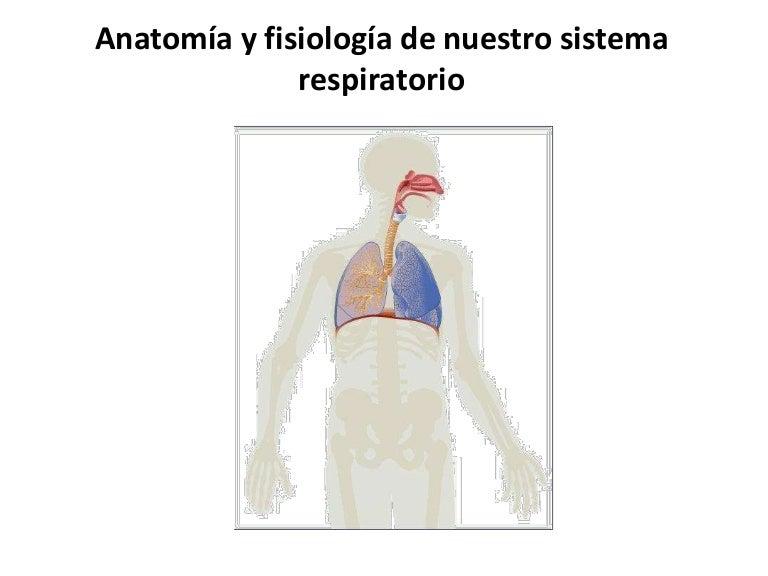 Vistoso El Sistema Respiratorio Toma Nota De La Anatomía Y ...
