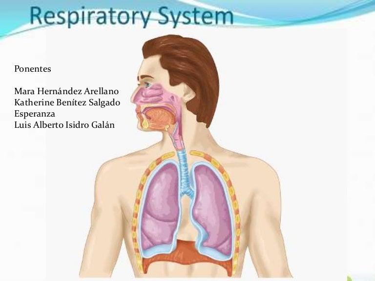 sistemarespiratorioexposion-140811085445-phpapp01-thumbnail-4.jpg?cb=1407749220