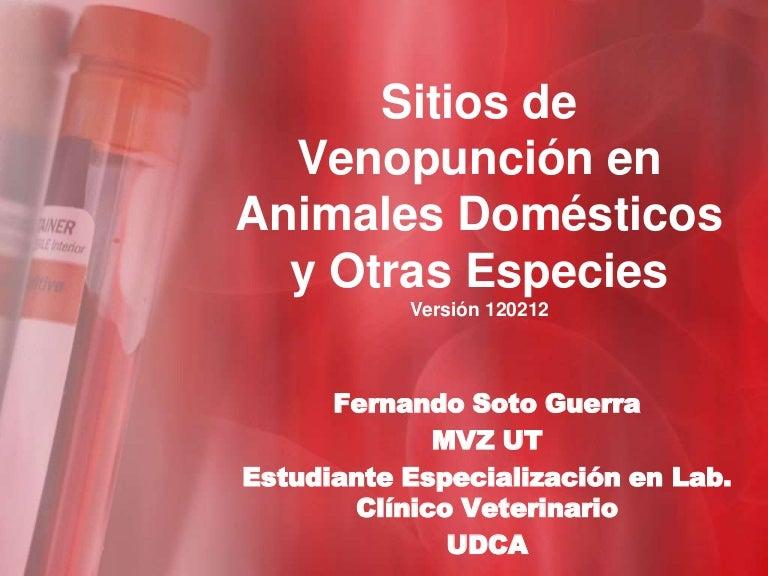 Sitios de venopunción en animales