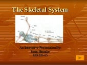 Skeletal Ppt