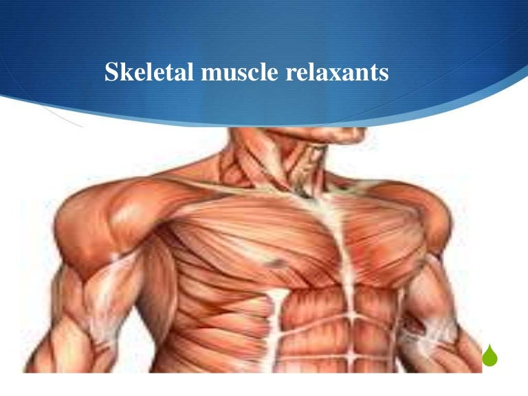 pharmacology: skeletal muscle relaxants, Muscles