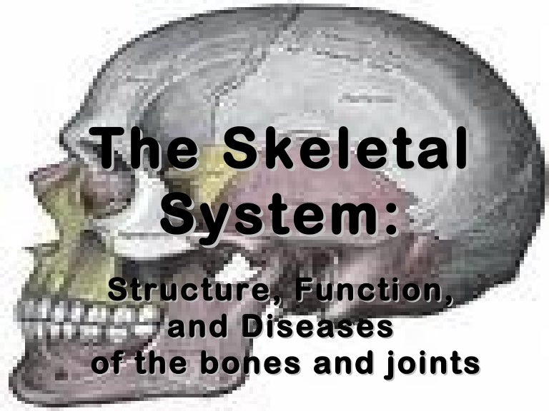 Skeletalsystem 111027103336 phpapp01 thumbnail 4gcb1319712622 fandeluxe Gallery