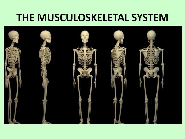 Skeletal System 6