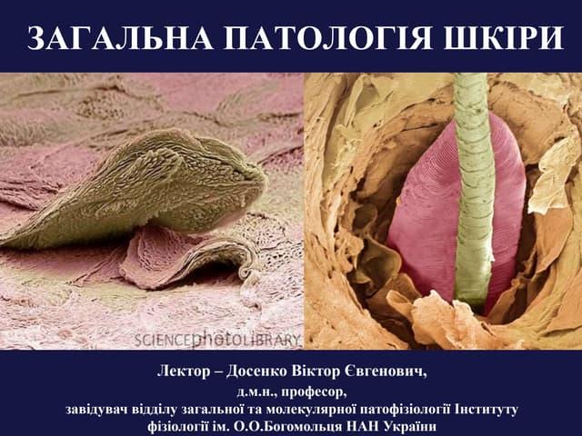 Skin: general pathology and aging