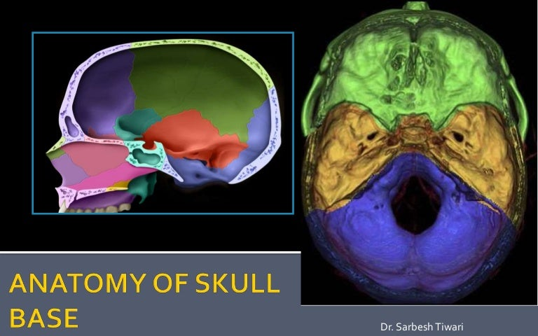 Skull Base Development And Anatomy