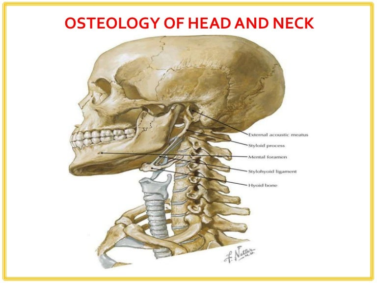 osteology of head and neck and its applied aspects