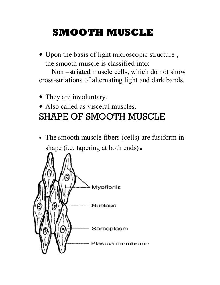 Smooth Muscle By Quratulain Mughal