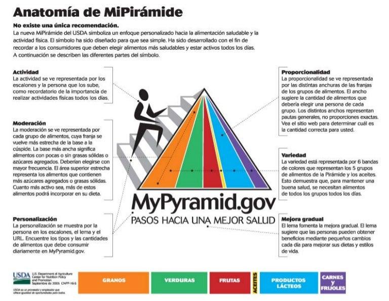 Sp my pyramid-anatomy
