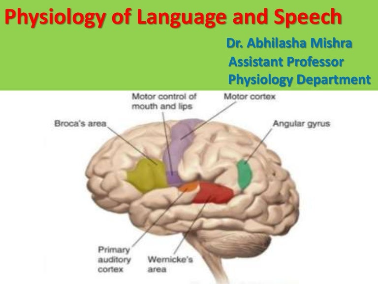 Physiology of Language and Speech