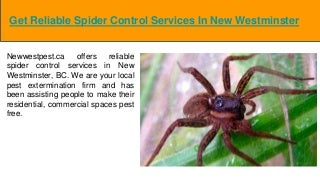 Spider Control New Westminster