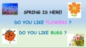 Spring: flowers and bugs