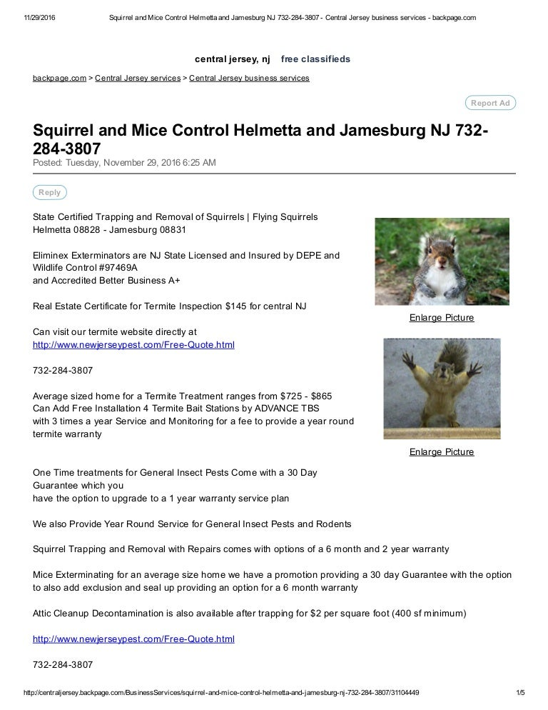 Squirrel and mice control highlands nj 732 284-3807 - central jersey …