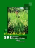 SRI  System of Rice Intensification FAQs Burmese