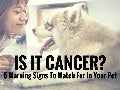 Is It Cancer? 5 Warning Signs To Watch For In Your Pet