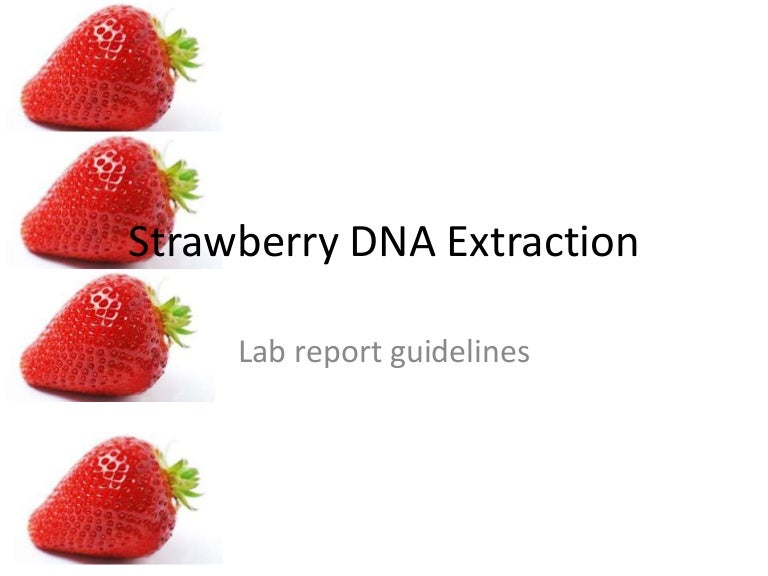 Strawberry DNA lab report
