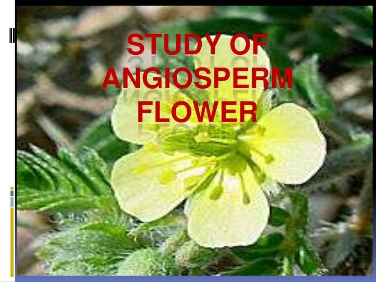 Unisexual flowers ppt presentation