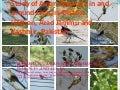 Study of avian diversity in and around chinari