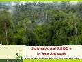Subnational REDD+ in the Amazon Rainforest