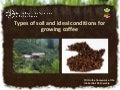 Types of soil and ideal conditions for growing coffee