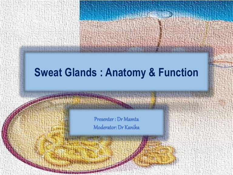 what is the technical name for sweat glands
