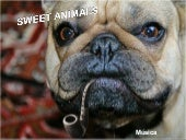 Sweet Animals