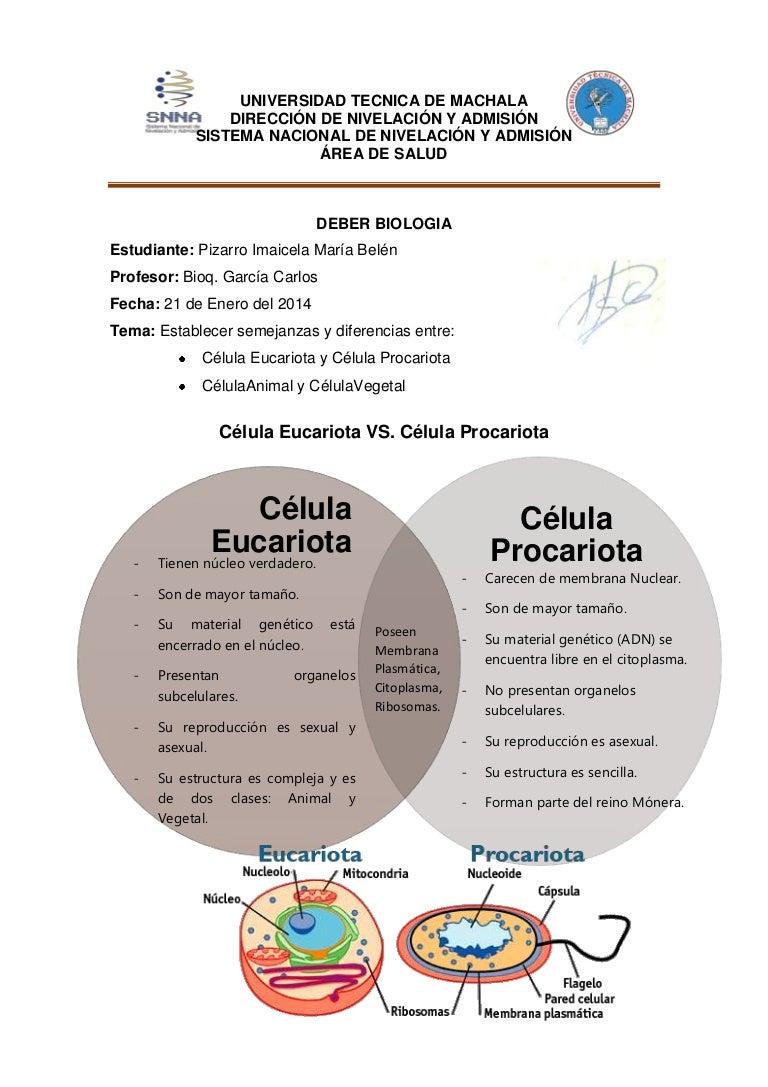 Diferencia entre celula sexual y asexual