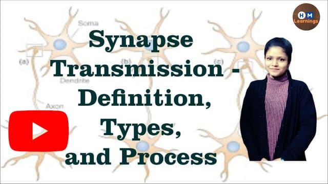 Synaptic transmission types I Steps of chemical neurotransmission I Nervous System Physiology