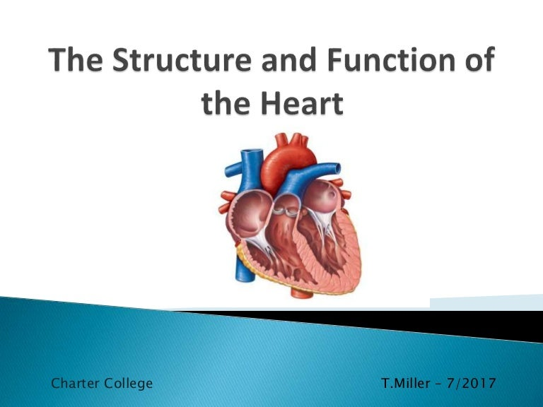 The Structure And Function Of The Heart