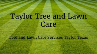 Tree trimming taylor tx