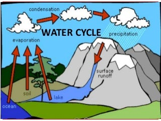 Worksheets Water Cycle Diagram For 5th Grade water cycle linkedin teach
