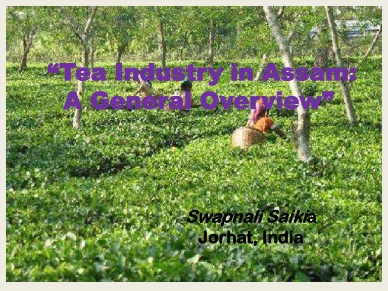 tea cultivation in assam