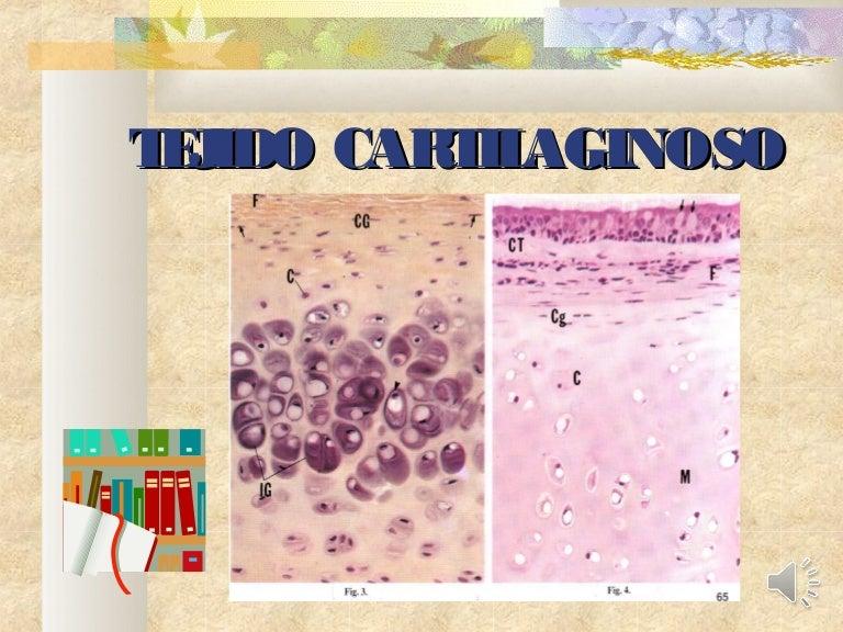 Hialino funcion tejido cartilaginoso