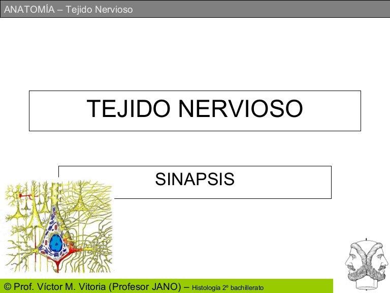 Hermosa Tejido Diapositivas Anatomía Cresta - Anatomía de Las ...