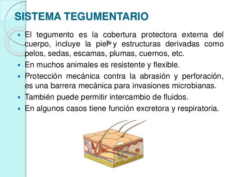 Tejido tegumentario vertebrados