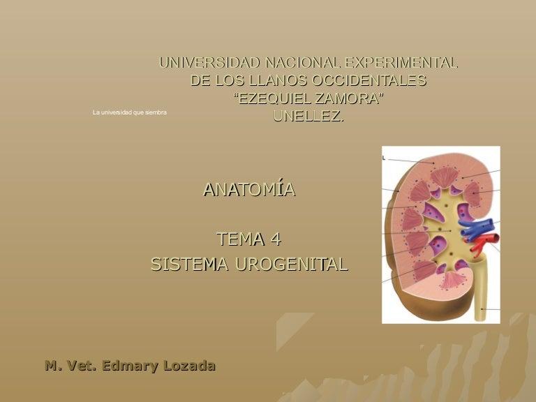 Tema 4 anatomia
