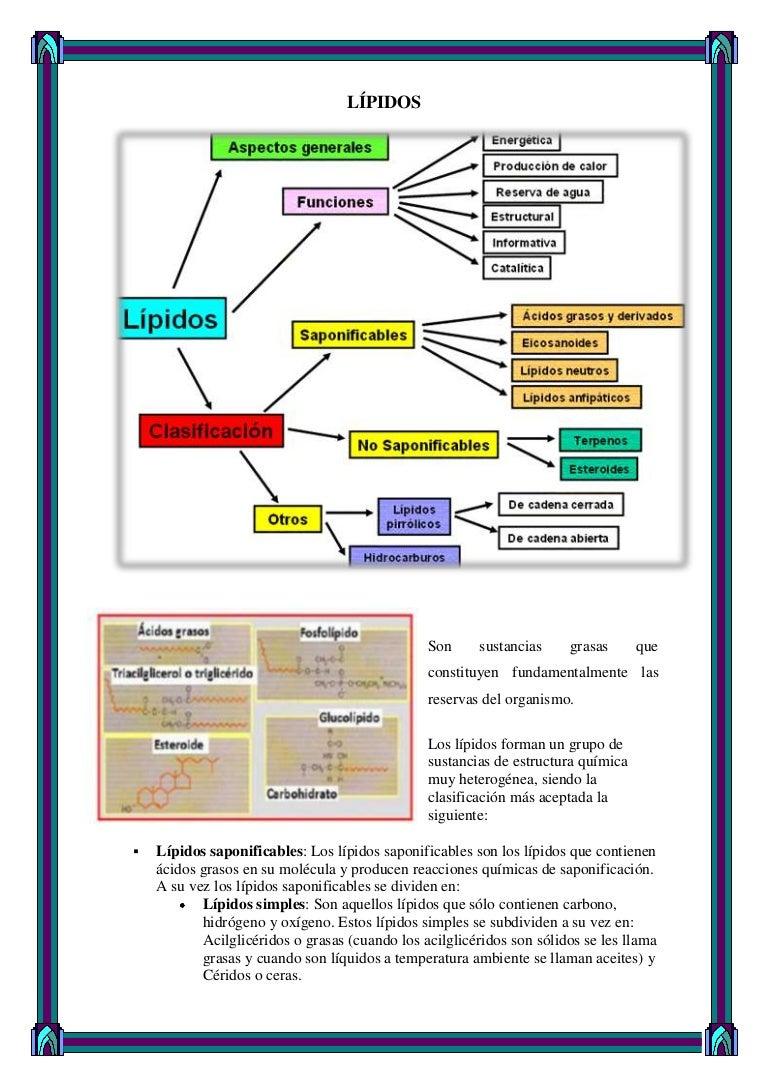 Pautas de 9 pasos para Metabolismo basale