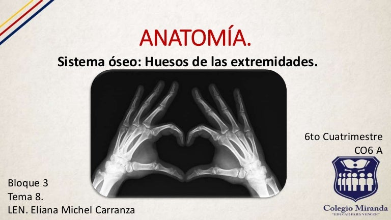 Sistema óseo: huesos de las extremidades.