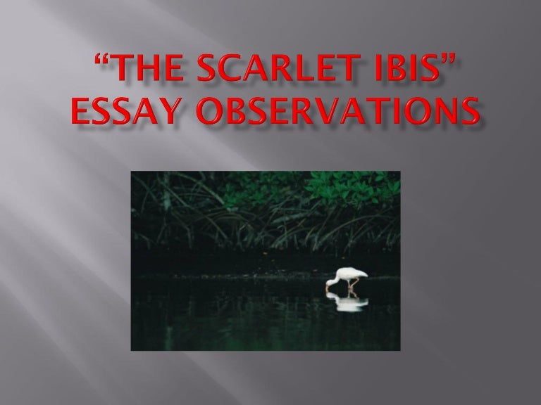 """the scarlet ibis essays Essays scarlet ibis scarlet ibis 7 july 2016 fiction there are multiple literary elements that combine together to create the theme and mood of a story in the short story, """"the scarlet ibis,"""" the author, james hurst, demonstrates the use of literary elements and the importance of vital life lessons  the scarlet ibis and doodle did."""