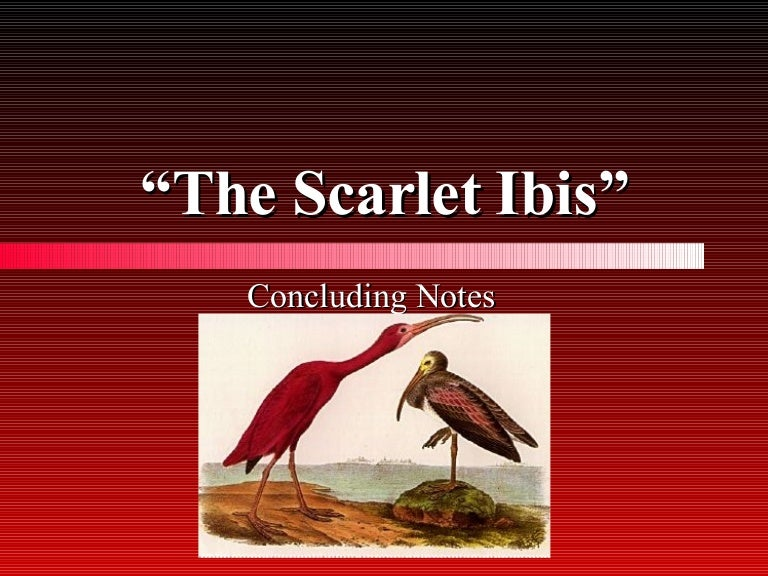 positive effects of pride in the scarlet ibis This essay the scarlet ibis and other 64,000+ term papers,  brother's pride had a great positive effect on the story brother pushed doodle to the limits which.