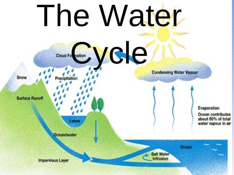 the water cycle 2 essay In nitrogen cycle, free n 2 gas of atmosphere is converted into ammonia or oxidised to nitrate at different stages blue green algae and n 2 fixing bacteria play a significant role in converting the atmospheric gaseous nitrogen into organic nitrogenous compounds and, finally, to nitrate, which is soluble in water.
