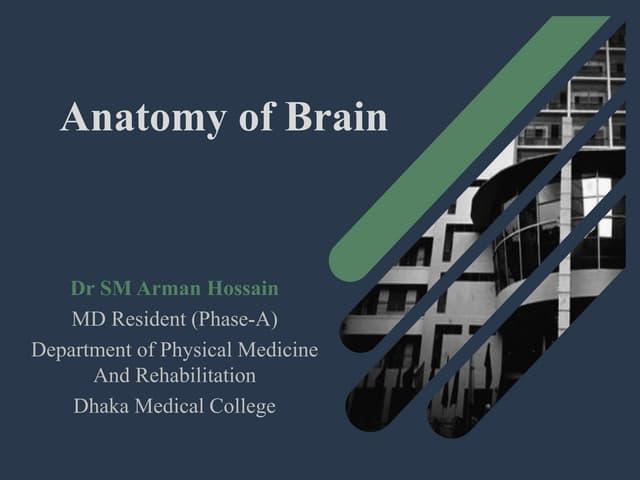 The Brain Anatomy by Dr Arman Hossain