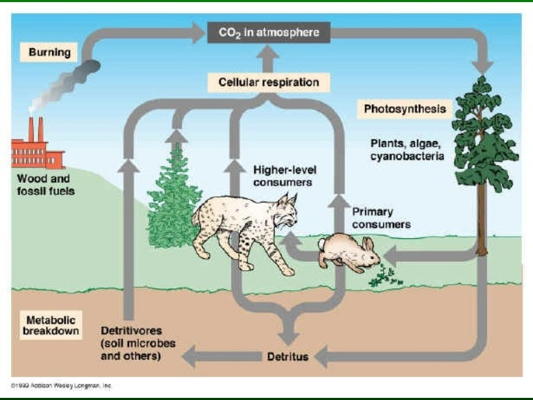 The Carbon Cycle – Carbon Cycle Worksheet High School